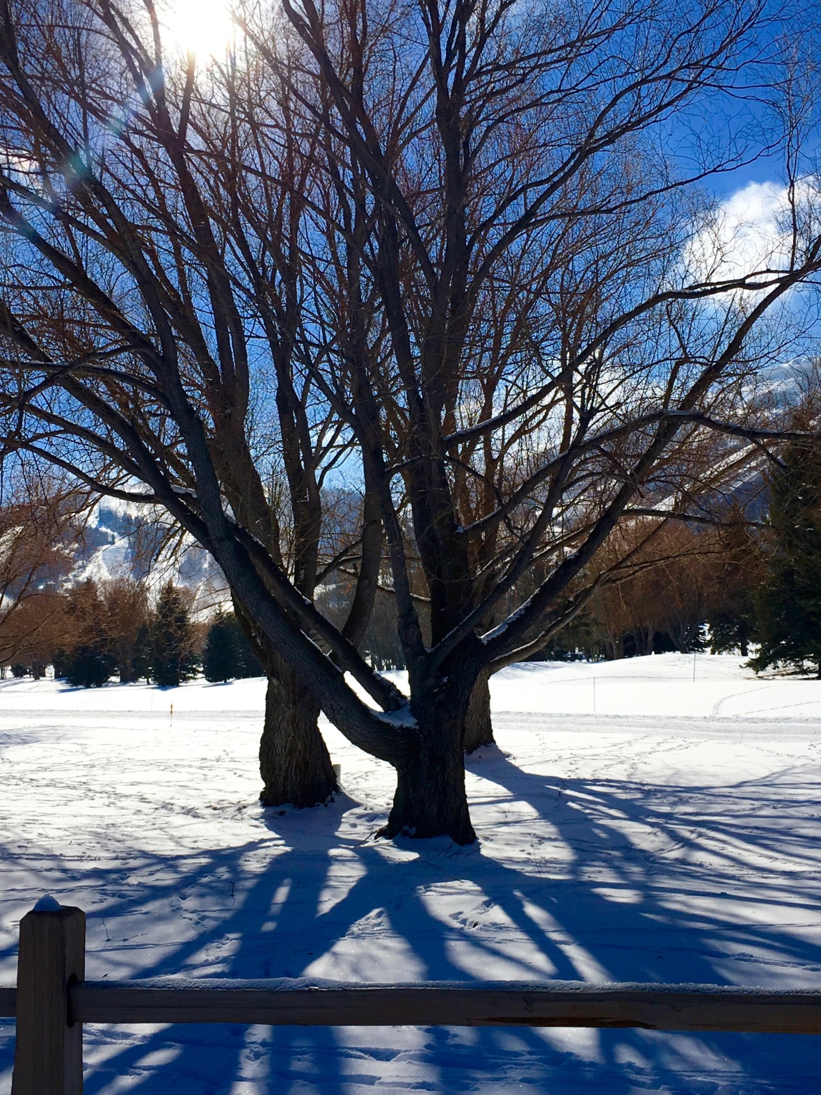 utah tree clump with 3 shadows.jpg