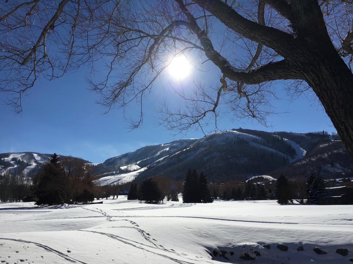 utah-trees-holding-sun