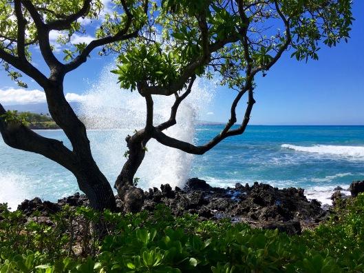 hawaii-back-of-tree-splash