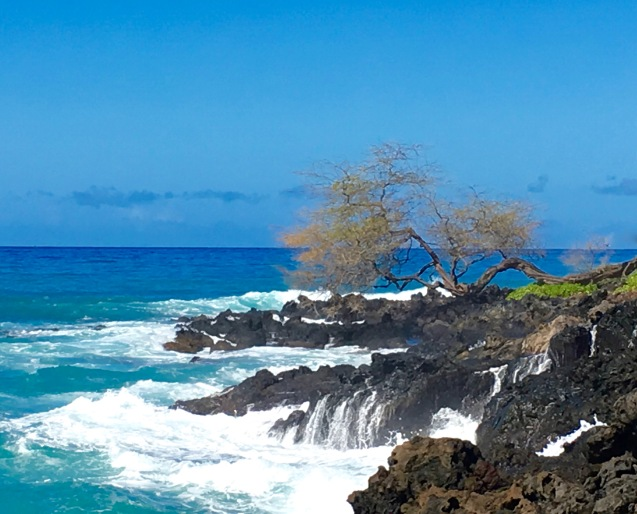 hawaii-wave-drip-square