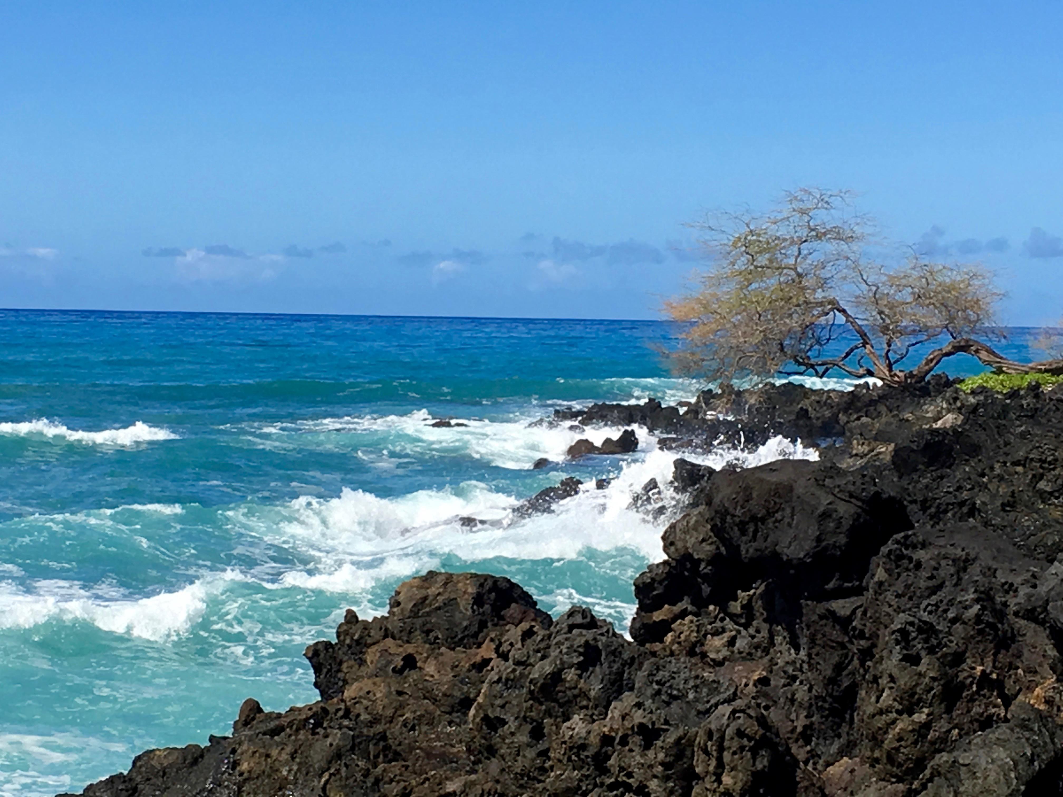 hawaii-wave-tree-1