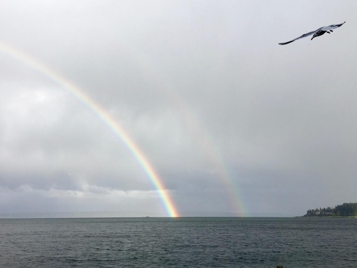 rainbow double seagull