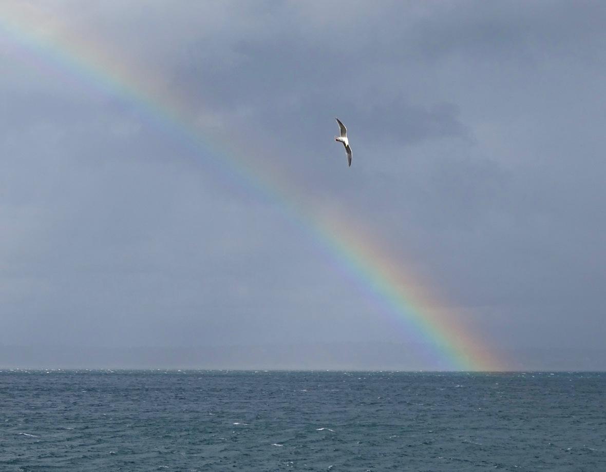 rainbow seagull above it